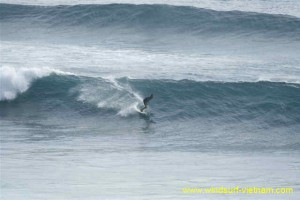 surfing_-_sup_20121115_2081126737